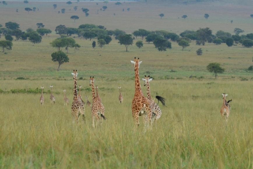 Africa1 1520.jpg