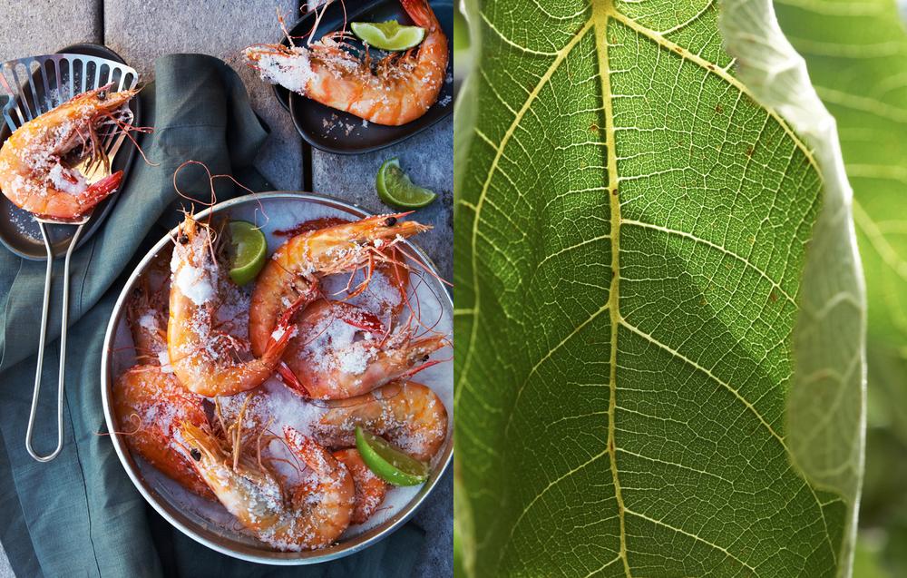 ShrimpFigLeaf.jpg