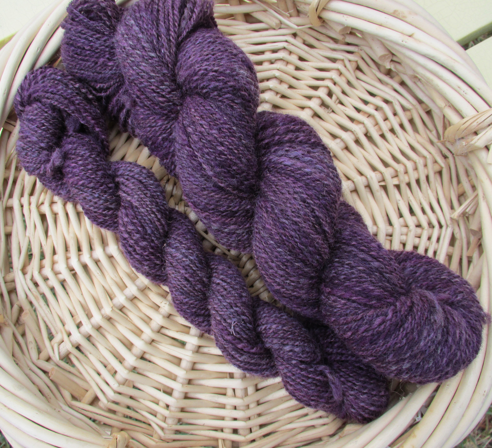 Coopworth in Amethyst