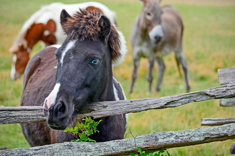 Horse South Carolina.jpg