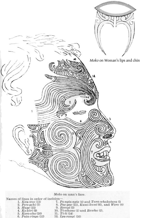 13 MaoriMoko.png