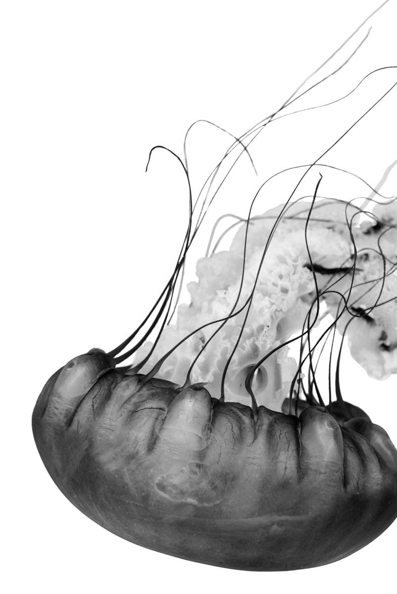 Jordan_K_Jellyfish-02.jpg
