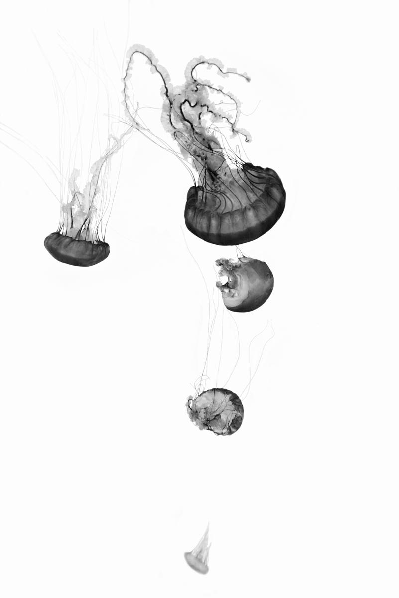 Jordan_K_Jellyfish-05.jpg