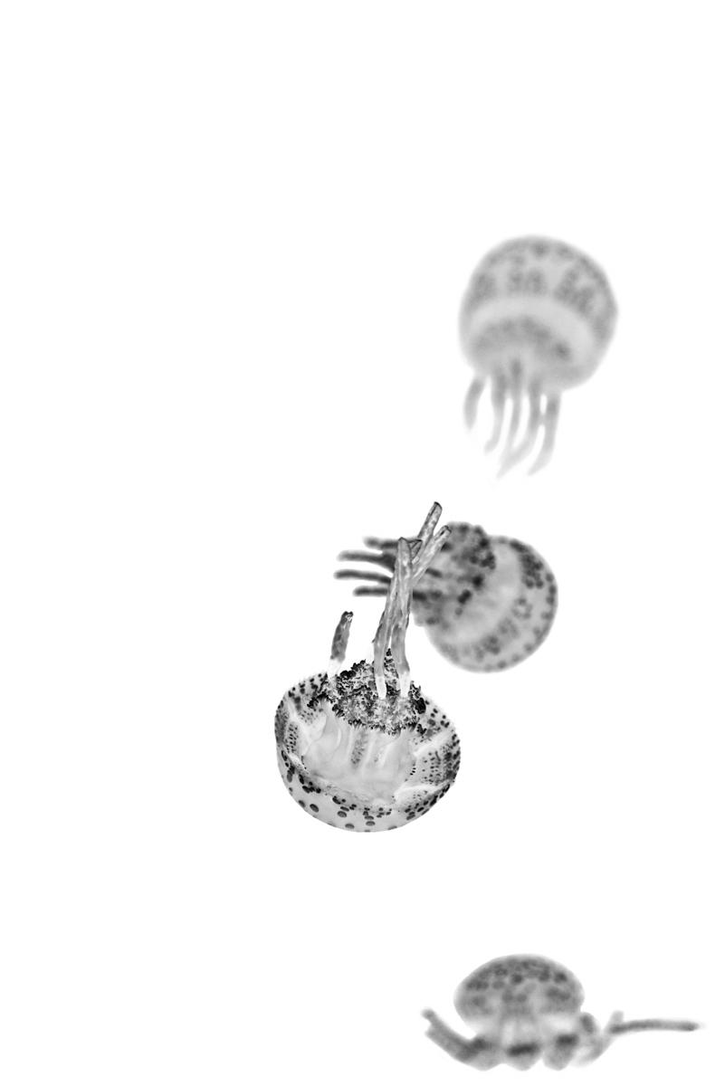 Jordan_K_Jellyfish-08.jpg