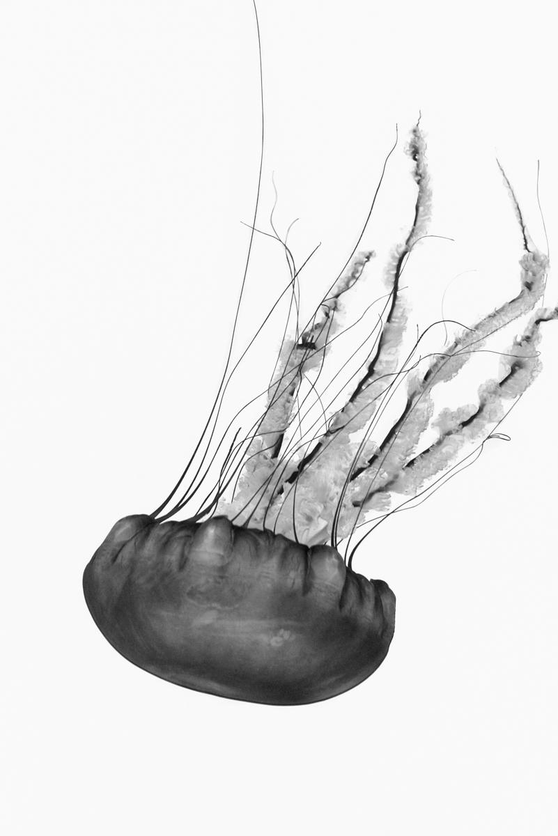 Jordan_K_Jellyfish-07.jpg