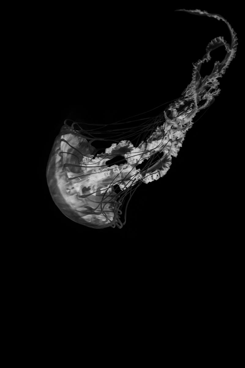 Jordan_K_Jellyfish-10.jpg