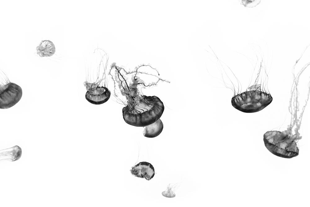 Jordan_K_Jellyfish-01.jpg