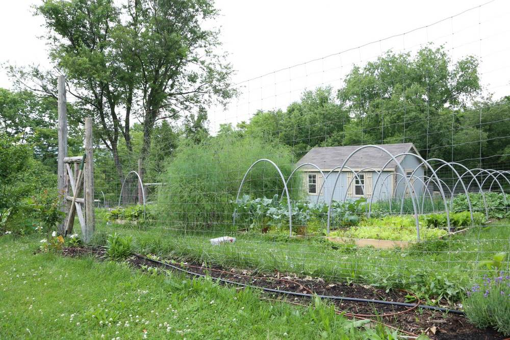 A post would be remiss without a shot of our vegetable garden. Everything is coming on nicely and we'll soon have some summer-type vegetables available!
