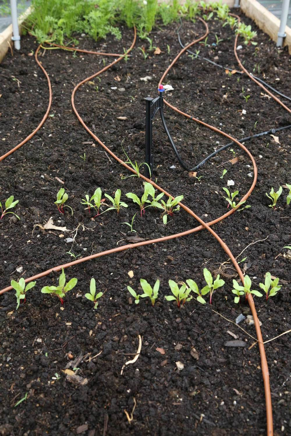 Quarter inch dripline along with a microsprinkler for seedlings. I don't highly recommend this particular microsprinkler since it seems to clog easily.