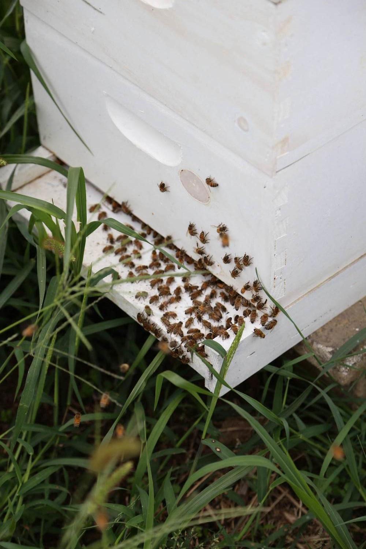 Honey bees at the farm.
