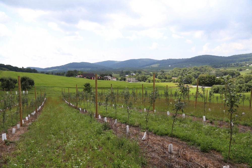 A new high-density apple planting overlooking a valley in beautiful Adams County.