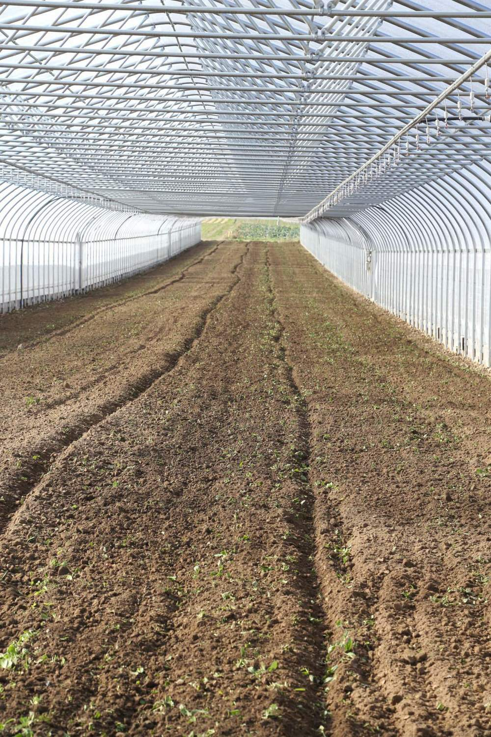 One of the 34'x600' greenhouses at Spiral Path, freshly tilled.