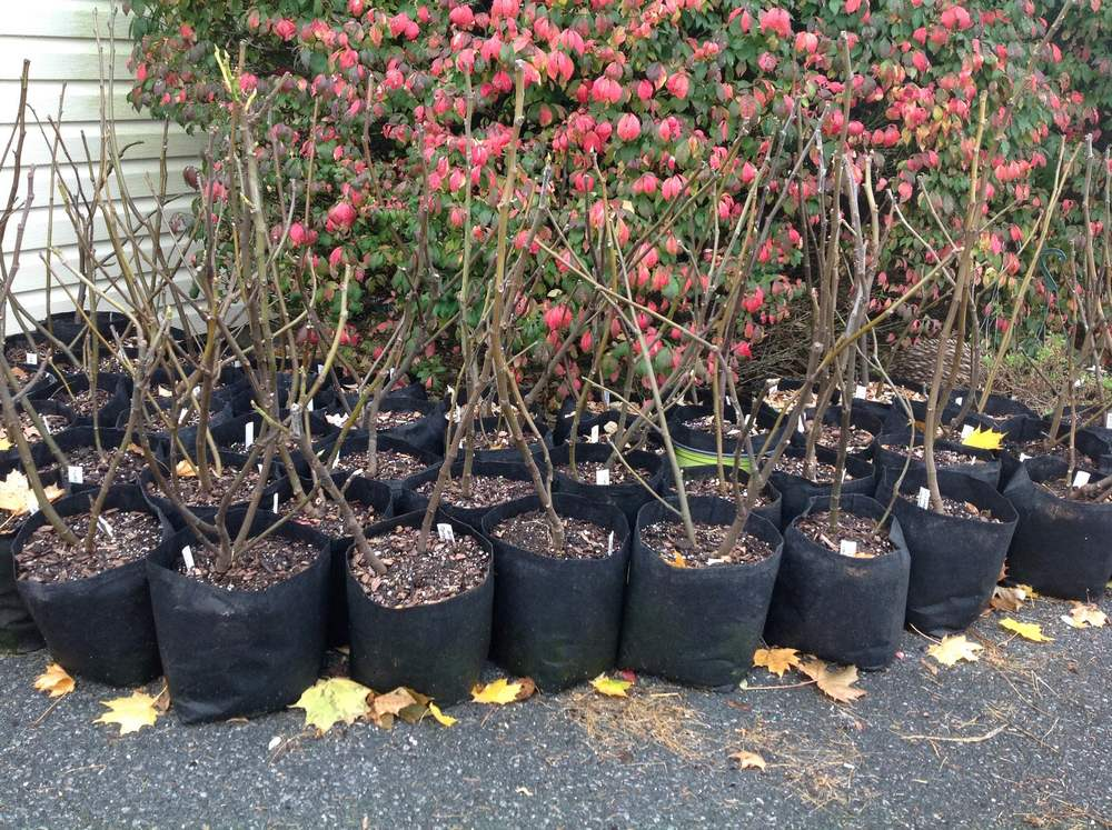 Some of our dormant trees waiting for a new home
