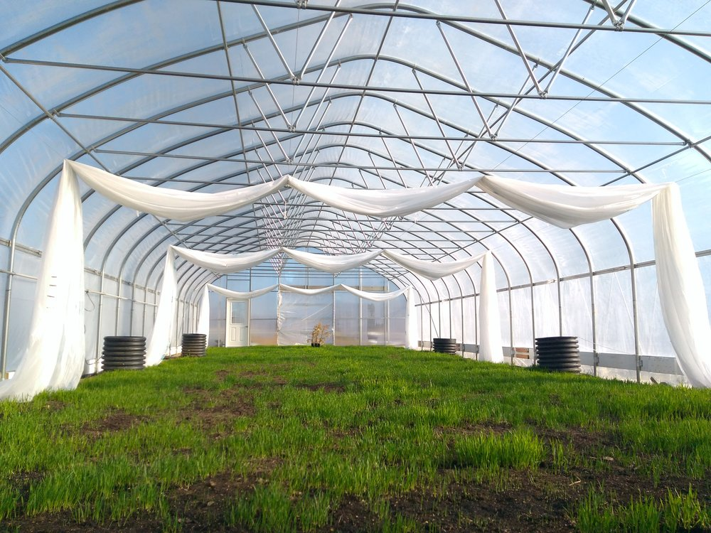 greenhouse_winter_oat_cover.jpg