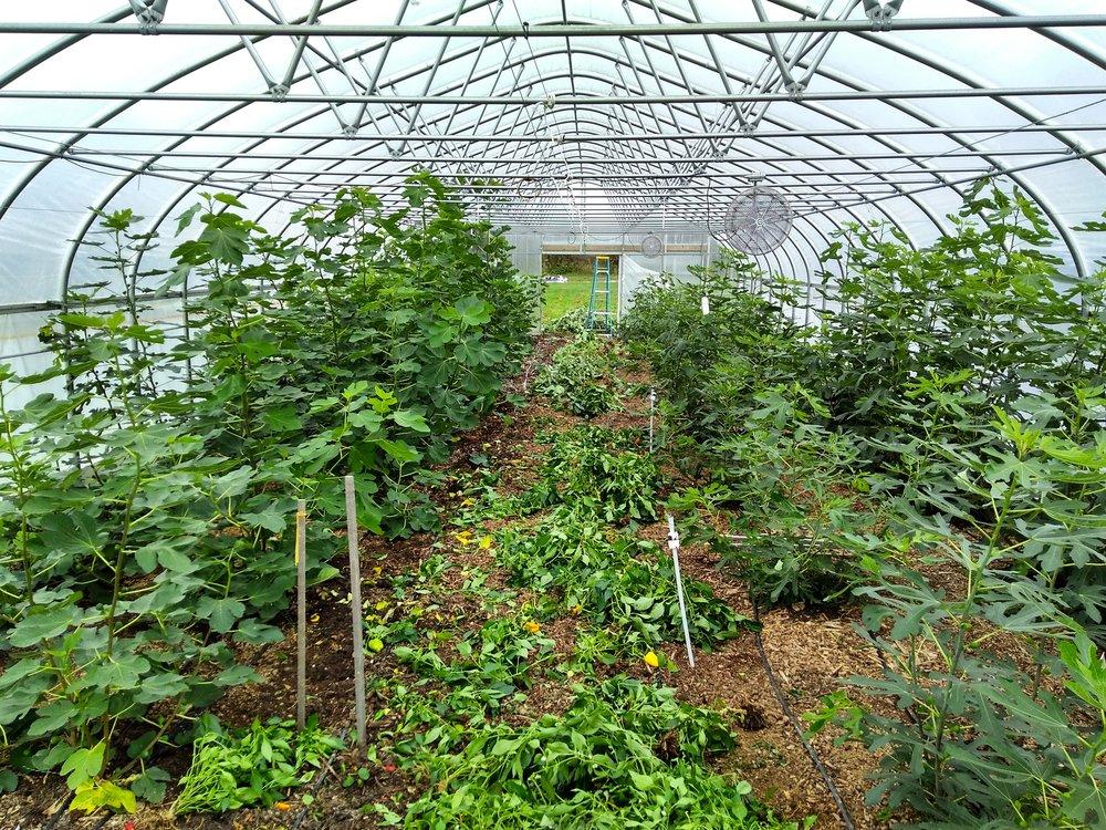 climate battery greenhouse updates threefold farm rh threefoldfarm org