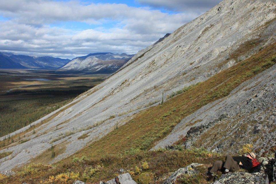 Tundra Nap.jpeg
