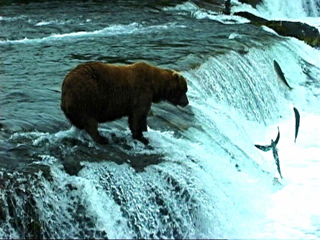 028-Bear 2000 C.jpg