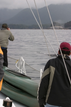 David and Phil check out a gray whale breaking the surface beside Arcturus.