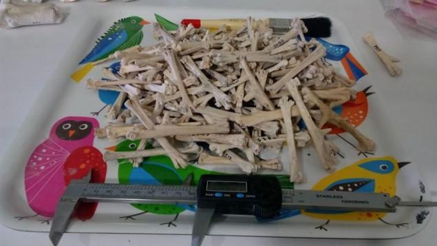 Maresha bones 2.jpg