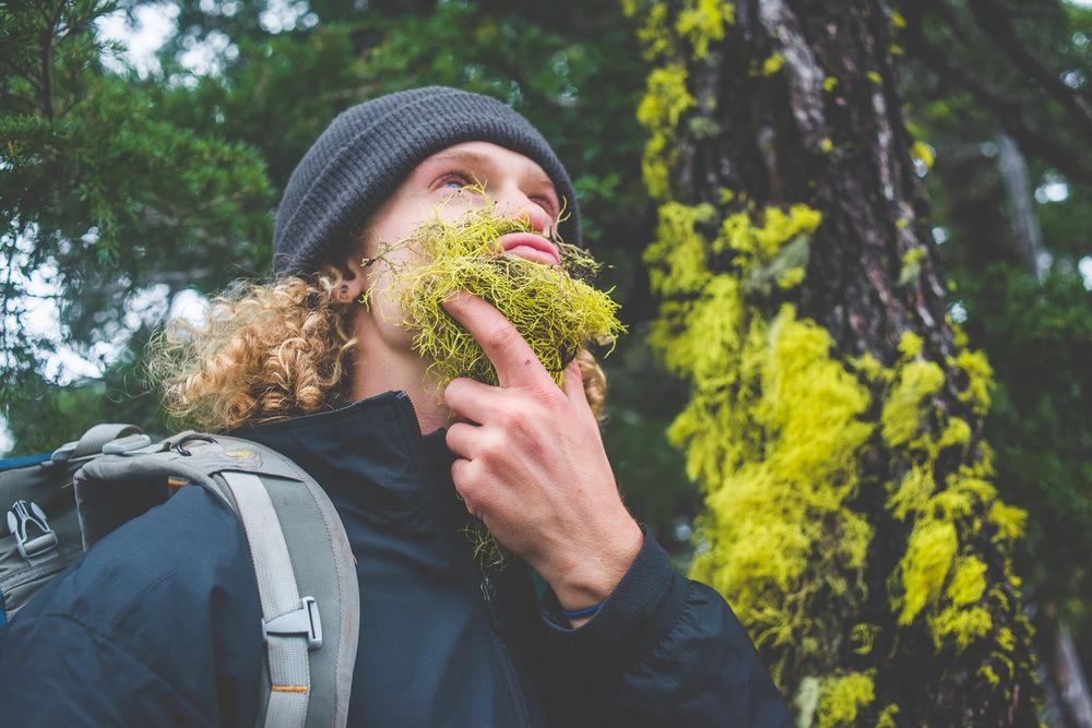 Corey's wolf lichen (Letharia vulpina) beard.