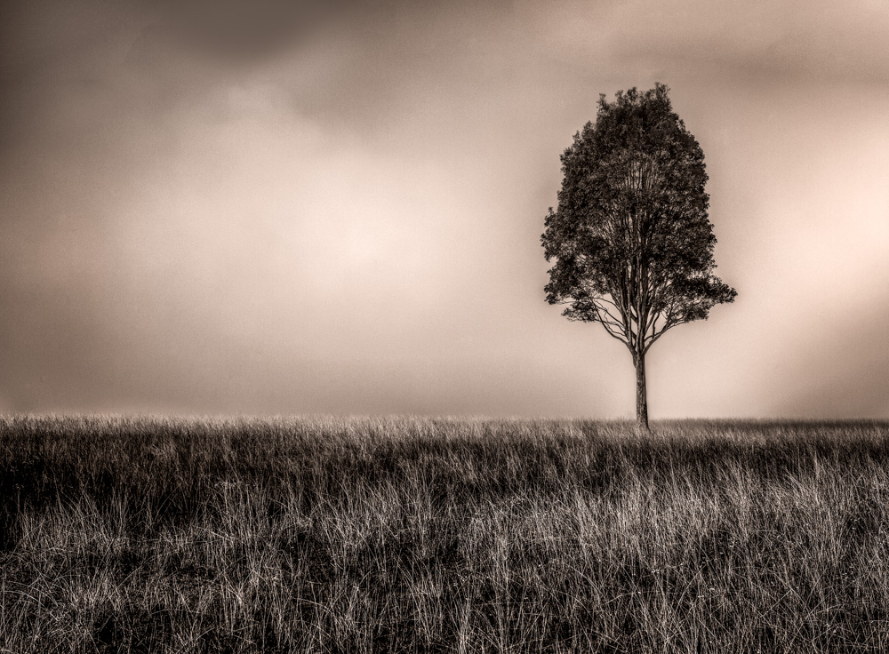 Landscape-.jpg