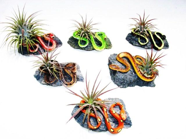 #250 Mini-snakes