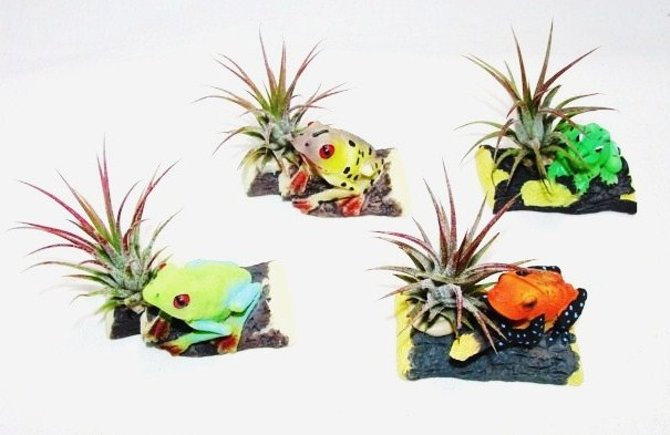 #298 Mini Rainforest Frogs