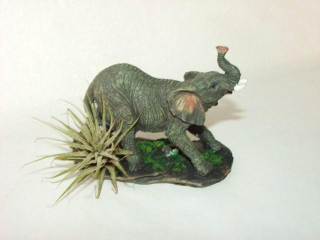 #340 Elephant