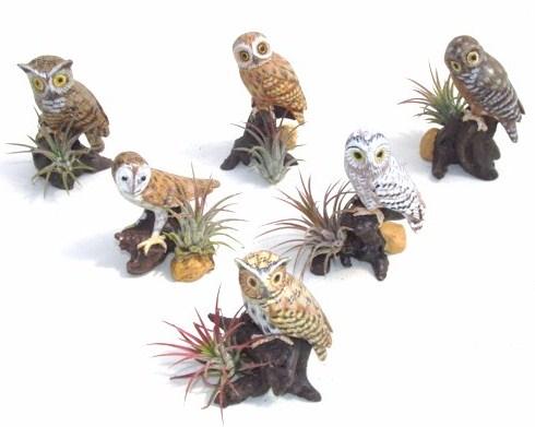 #374 Owls