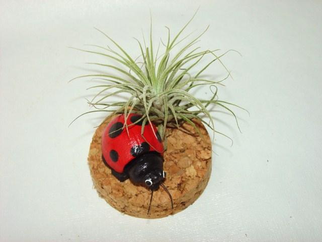 #409 Bobble-Head Ladybug