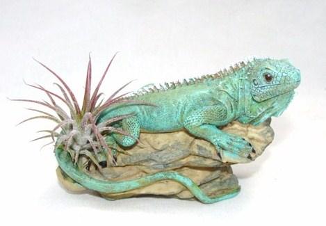 #431 4 inch iguana