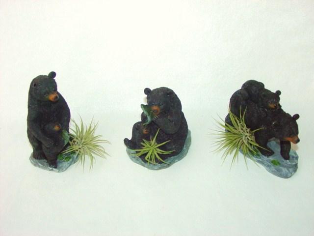 #436 lg Black Bear
