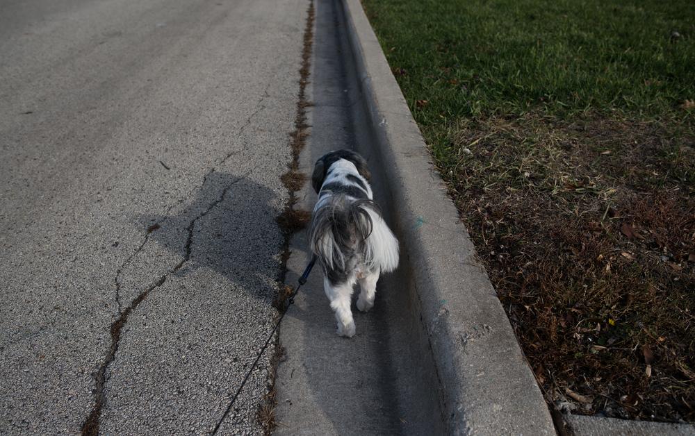 Tinka bites, but I love her Joliet, Ill. 2010.