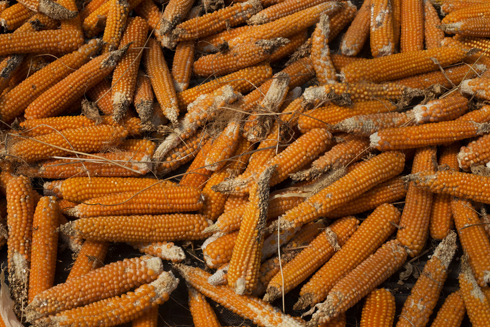 Popcorn_917_web.jpg