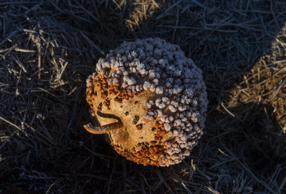 Gourd_cote_web.jpg