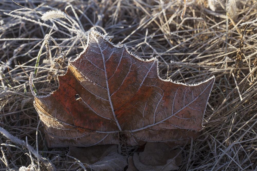 frost_Cote.jpg