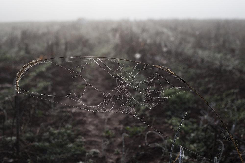 Spiderweb_spring_cote.jpg