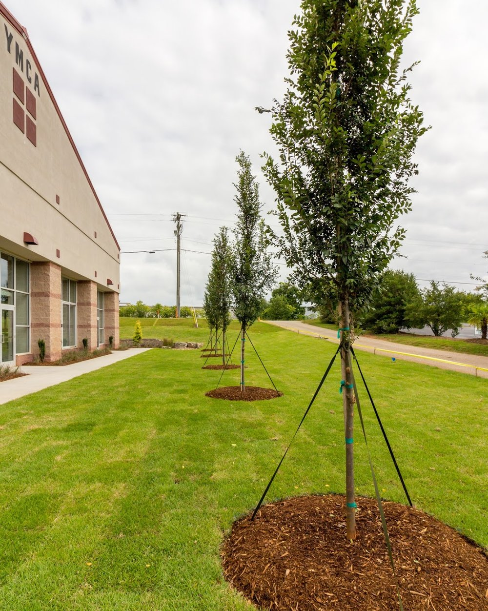 Landscape Design Middle Tyger YMCA Trees