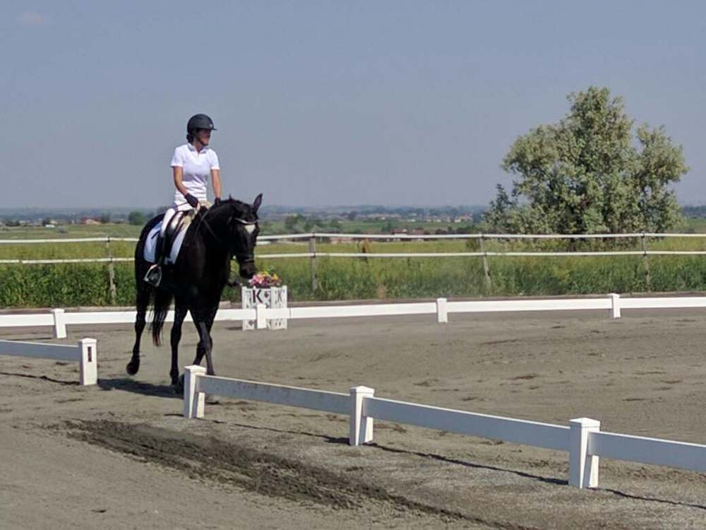 Abbie competing at a dressage show in Colorado with her appendix gelding, Spider.