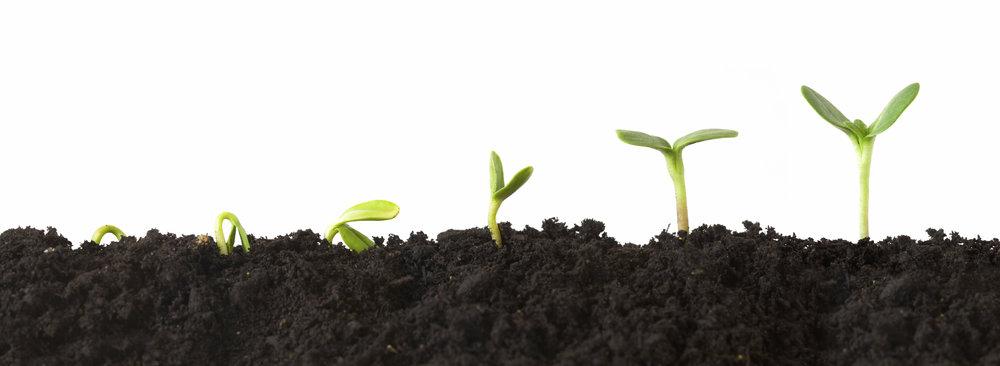plant_growth.jpg