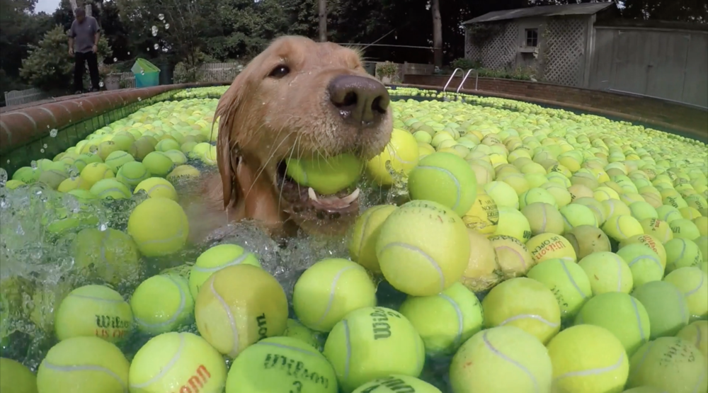 Kyle Swimming is Tennis Balls for Dan's Dog Walking and Pet Sitting.png