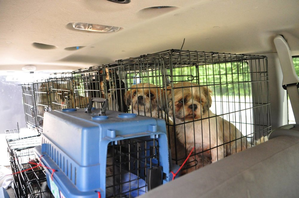 Rescue Dogs from Hurricane Harvey Rescue.jpg
