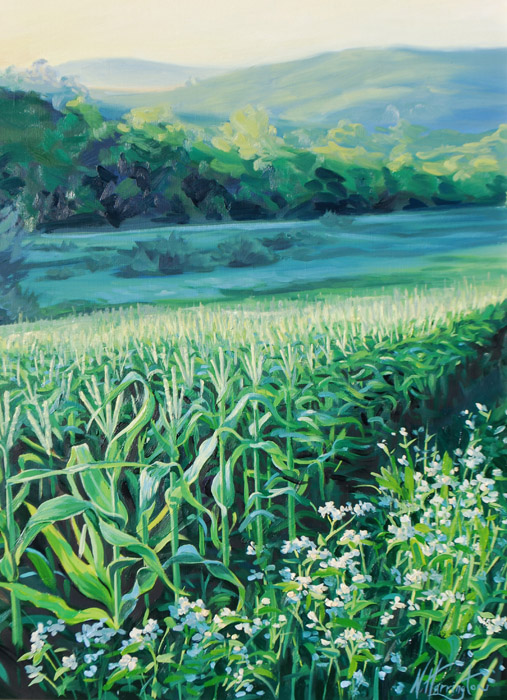 """Rows of Corn With Buckwheat, Summer Sunrise"" Oil on linen 24"" x 18"""