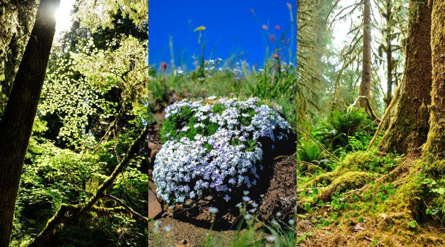 catieleary-olympicflora.jpg