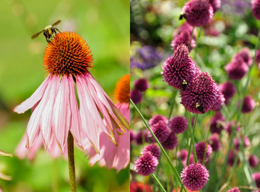 catieleary-flowersbees-vancouver.jpg