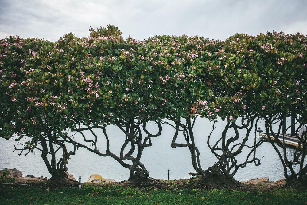 flowering+bushes.jpg