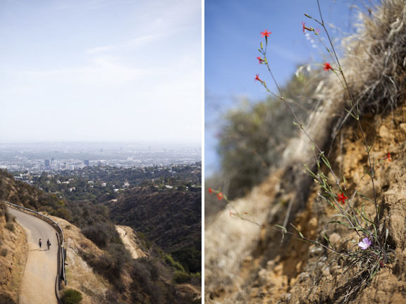 flowershill.jpg