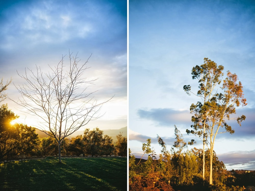 ojai+meditation+mount+trees.jpg