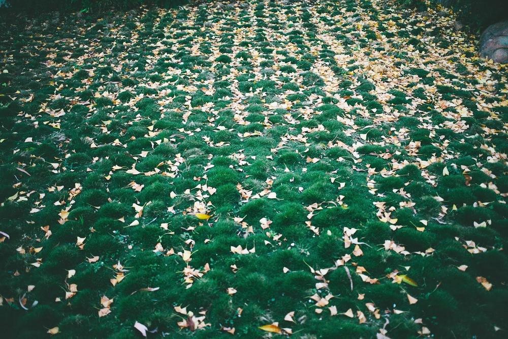 leaf+patterns.jpg