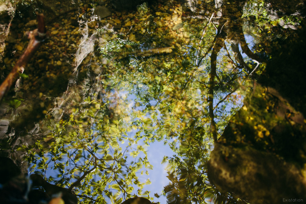 leaves reflection water